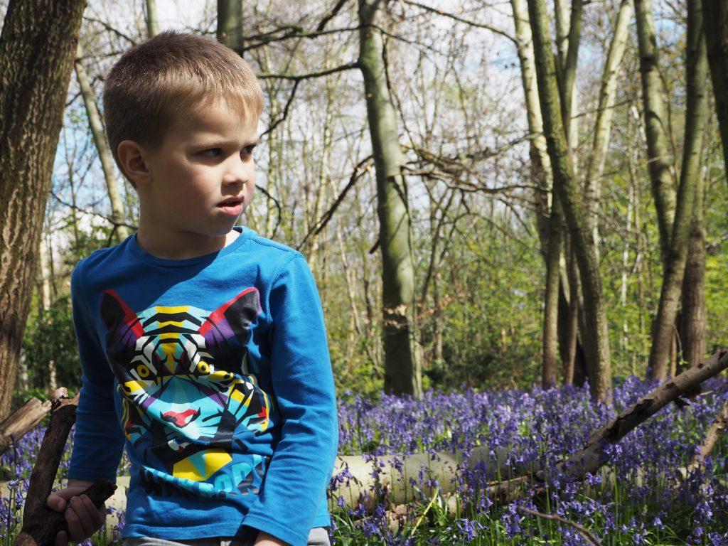 Walking among the bluebells