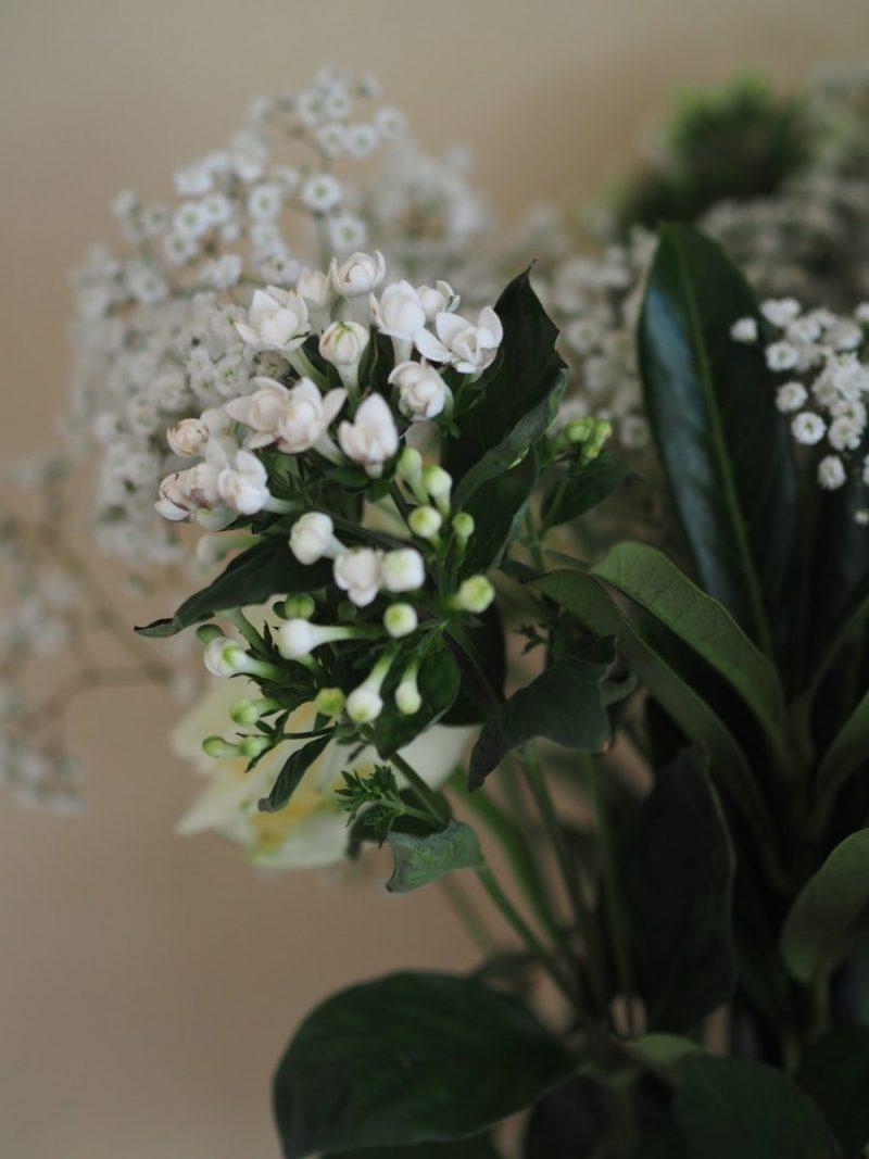 Freddie's-Flowers